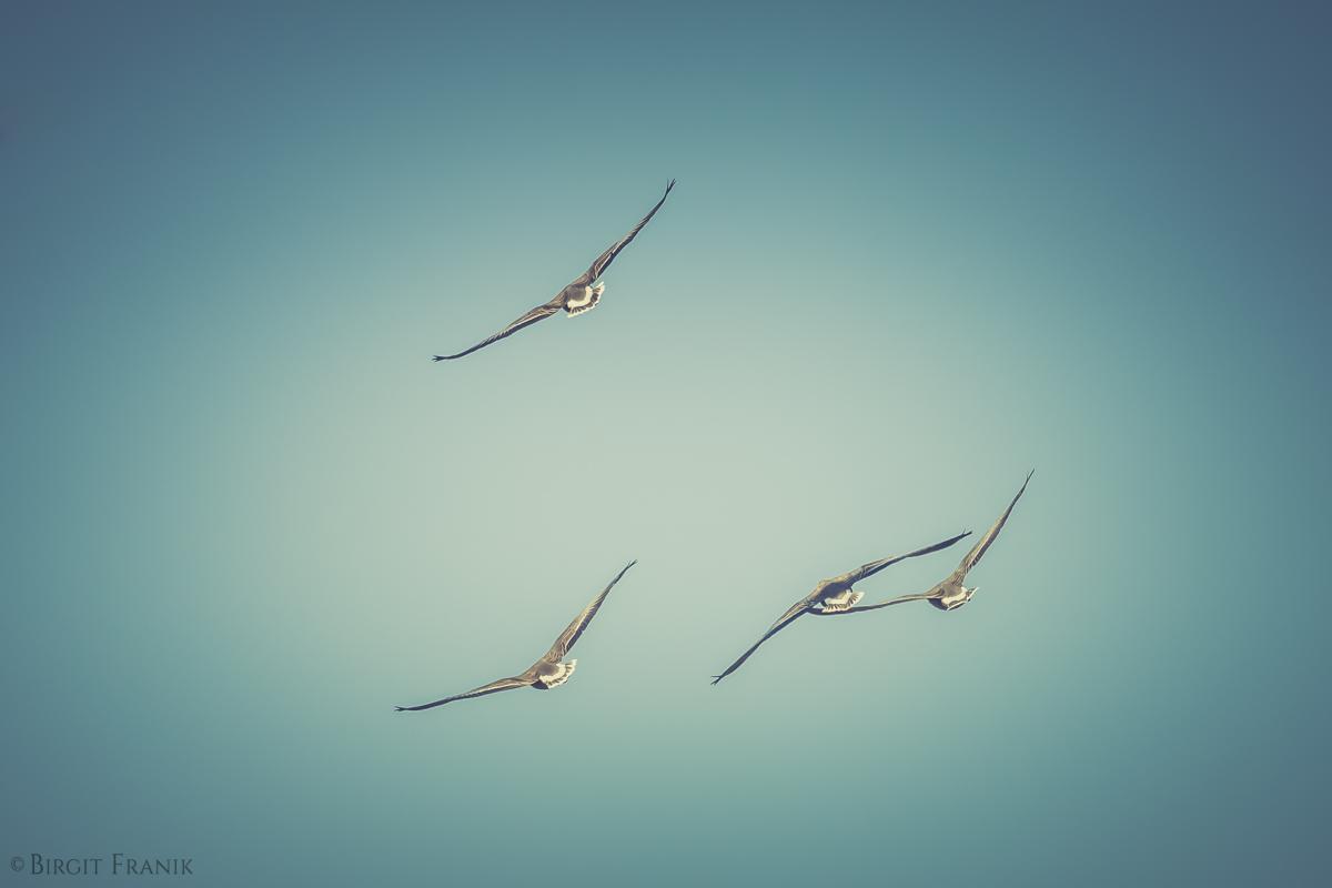 © Birgit Franik-20130325-7791