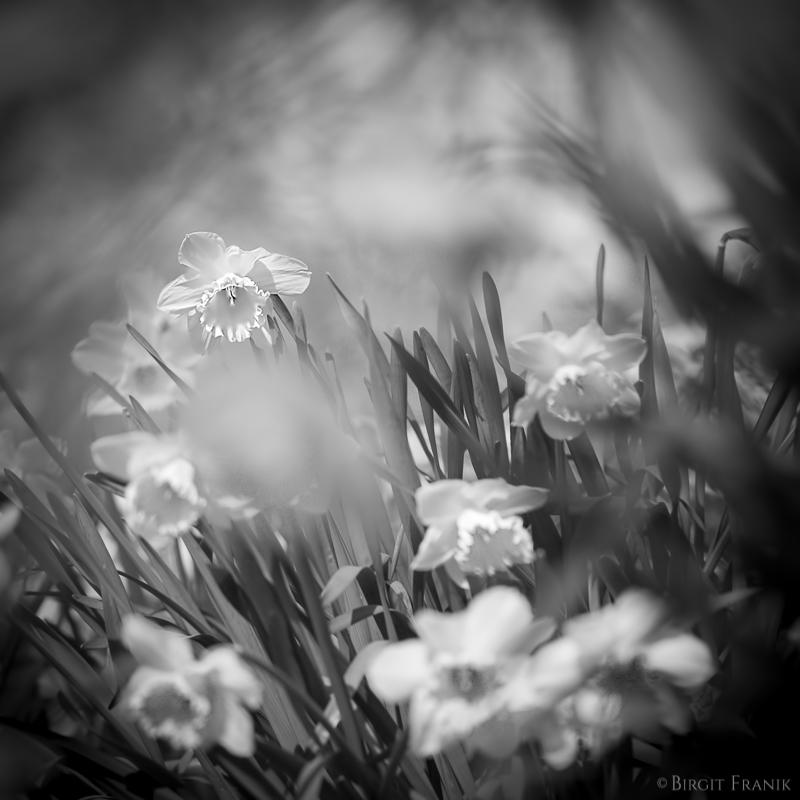 © Birgit Franik-20160401-1264