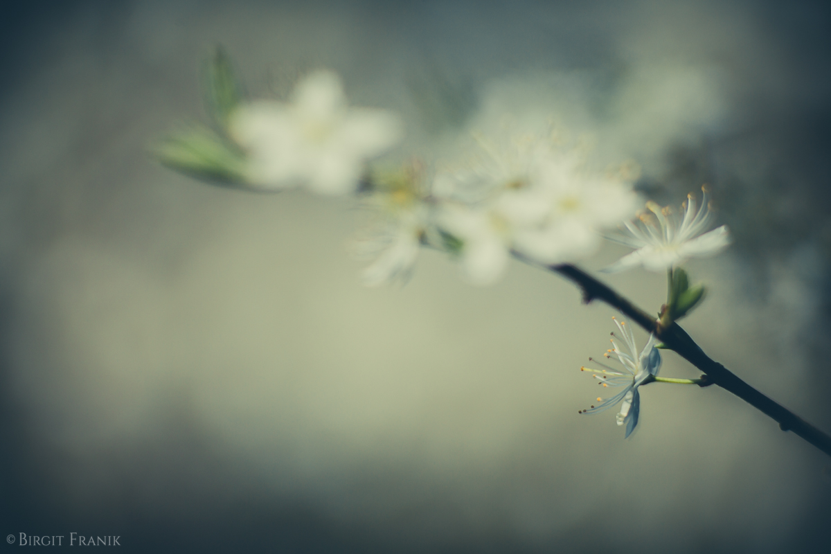 © Birgit Franik-20160412-2348