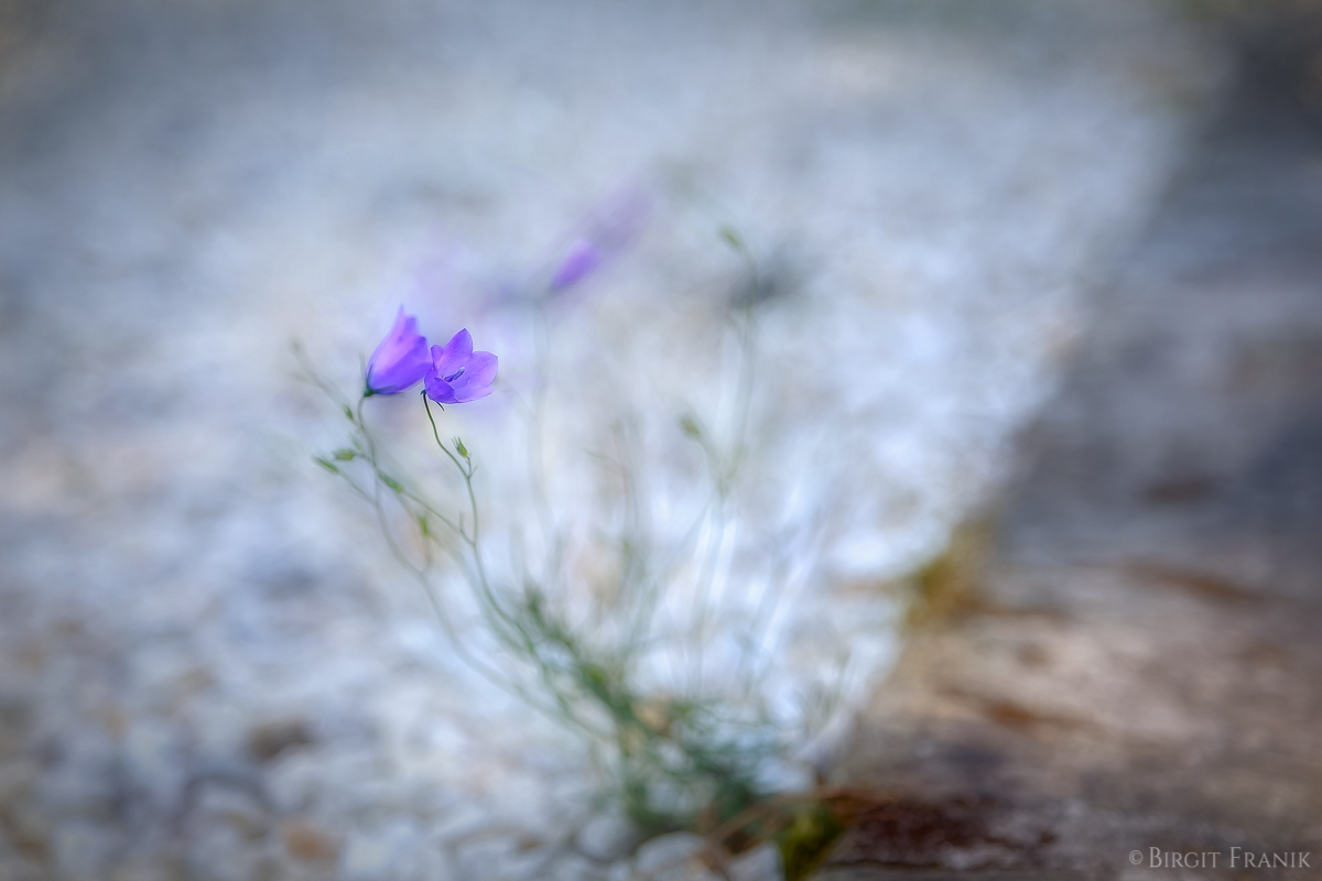 © 2014 Birgit Franik-20140711-8728