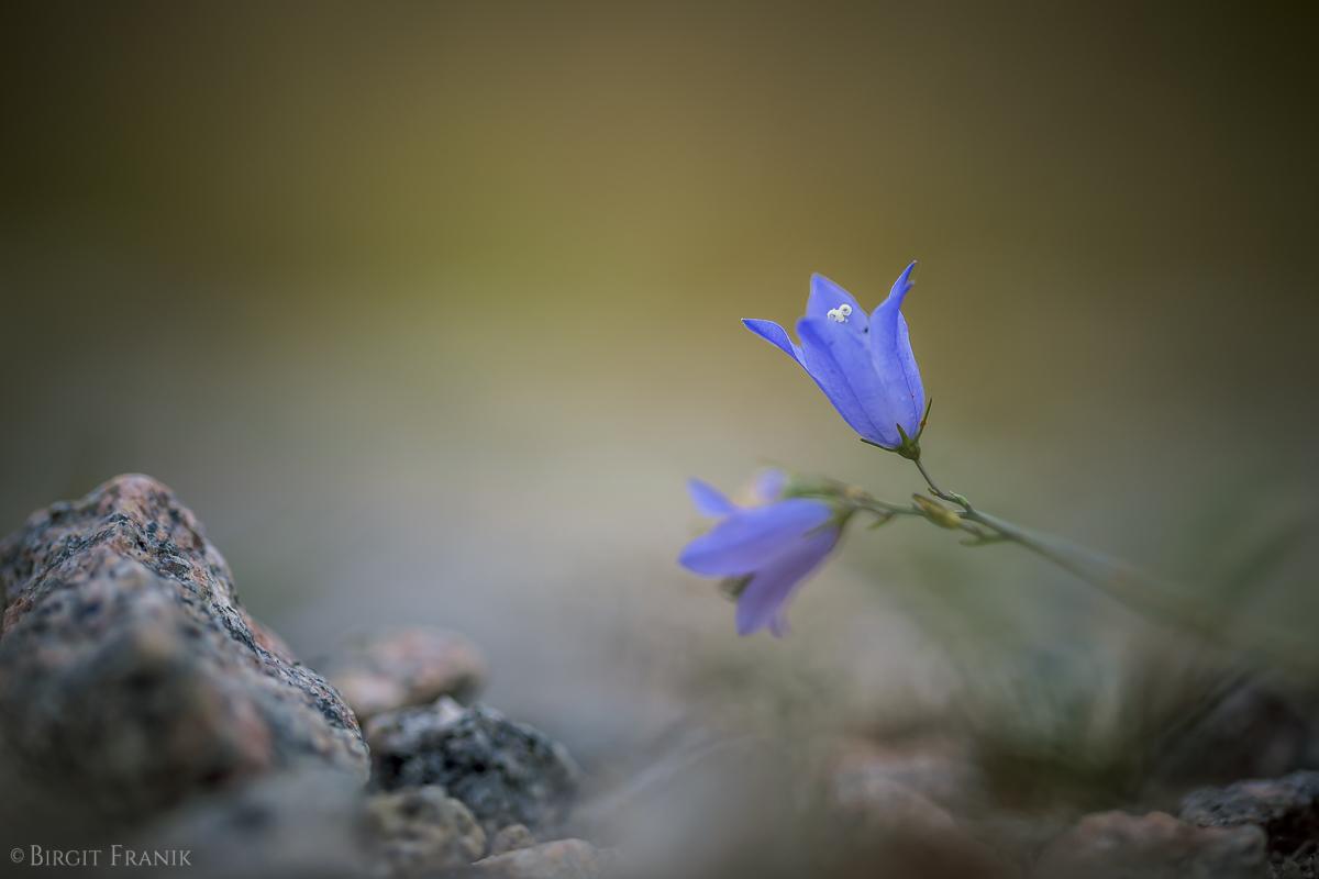 © Birgit Franik-20140718-0767
