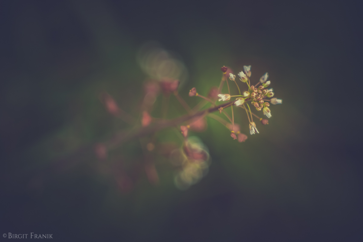 © Birgit Franik-20160430-4091