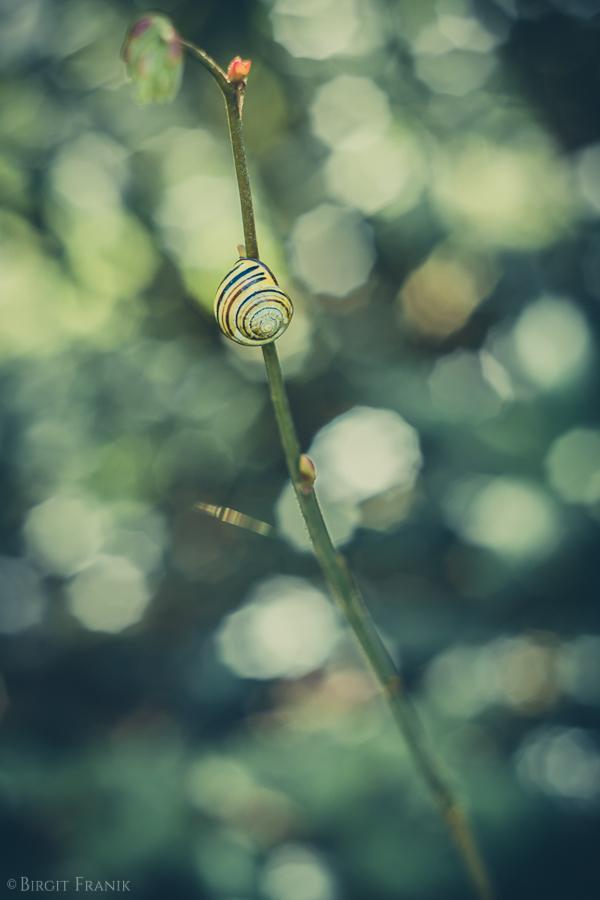 © 2016 Birgit Franik-20160417-2858
