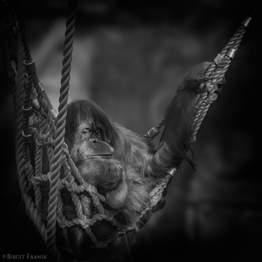 © 2011 Birgit Franik-20110901-2 Zoom Erlebniswelt