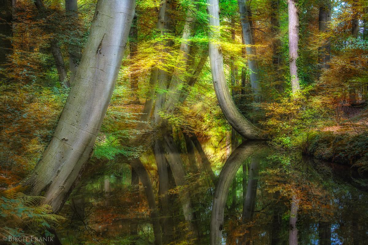 © 2016 Birgit Franik-20160814-2222-Autumn