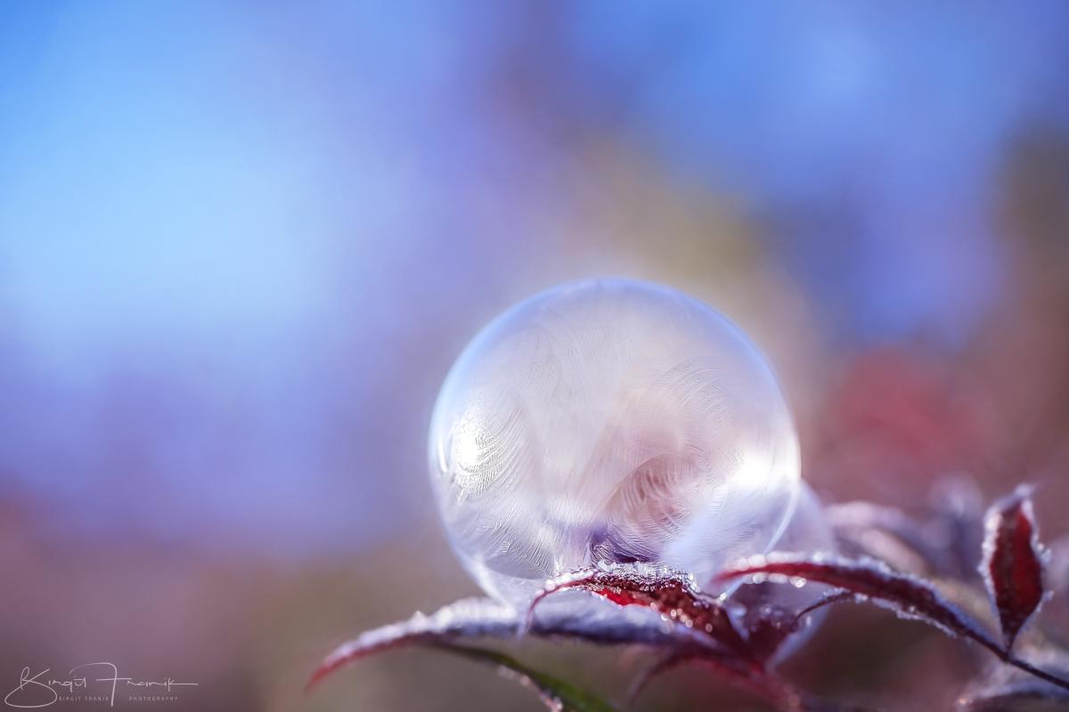 c-2016-birgit-franik-20161129-0198-bubbly