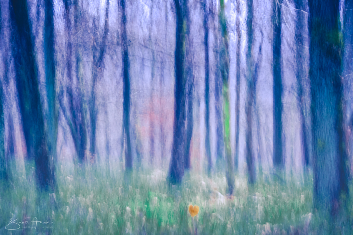 heart woods