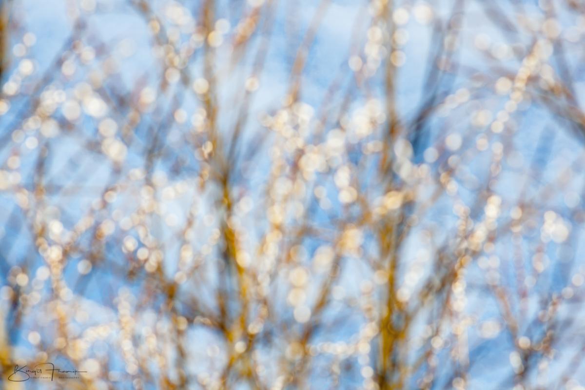 Frühlinge