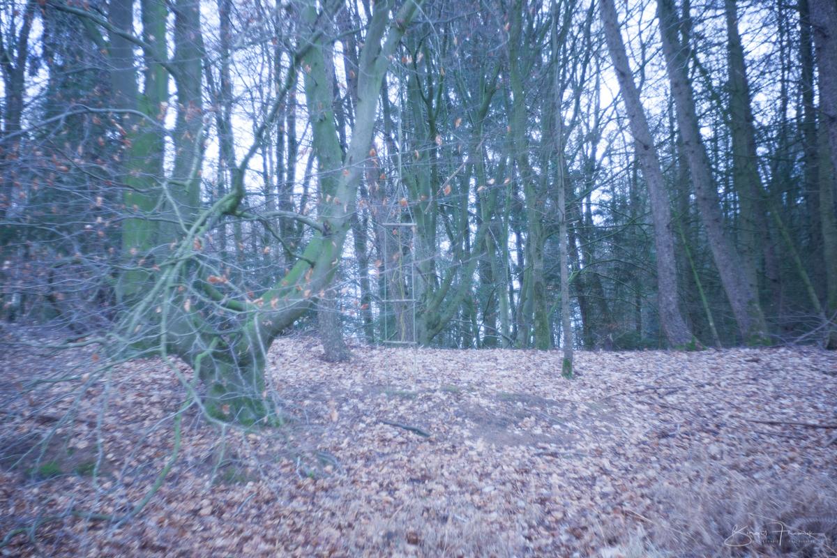 Strickleiter im Wald