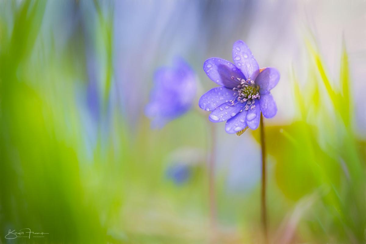 Tears in spring