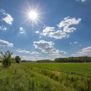 In den Feldern gegen die Sonne fotografiert