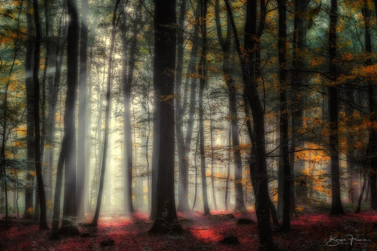 Gegenlicht im Wald - leichter Nebel