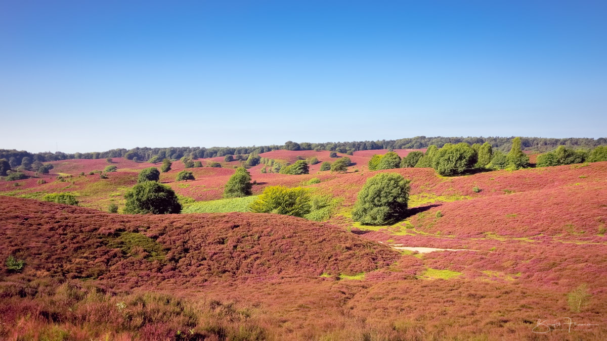 Posbank NL - Blick über die Heidelandschaft