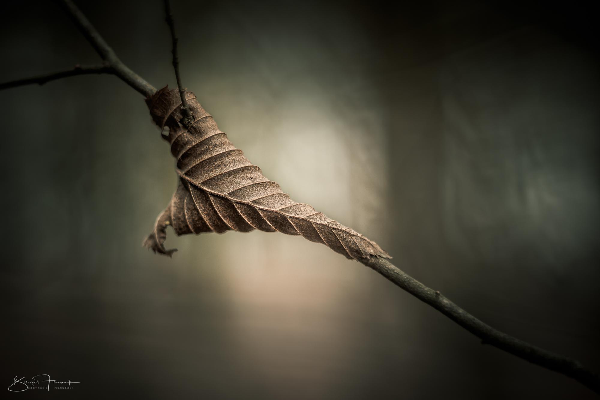 Old leaves