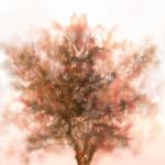 Autumnpainting