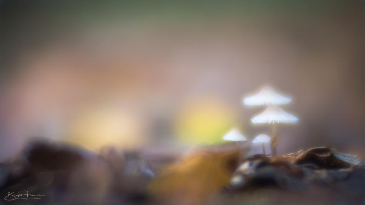 Pilze im Laub