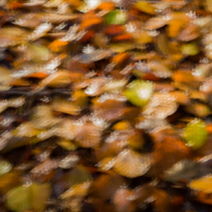 Autumn waterlilly
