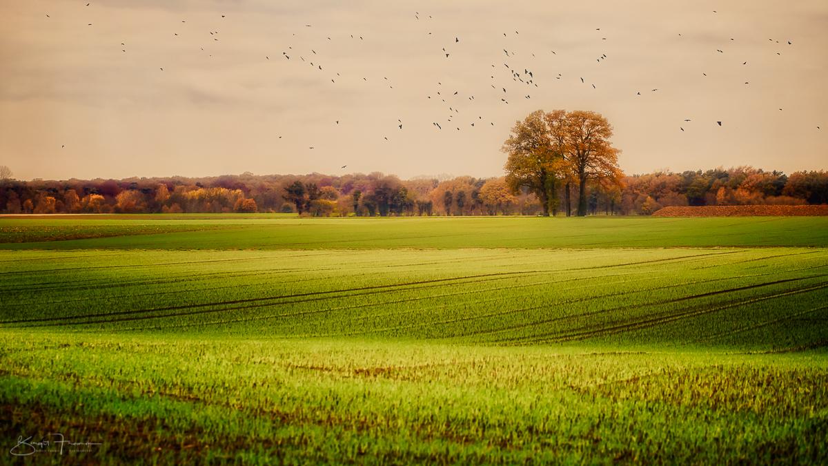 Vier Jahreszeiten - Herbst - Foto-Tagebuch 09/52
